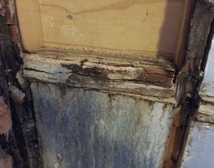 Wet Rot Fungus attacking section of stud partition wall
